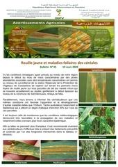 05 20bulletin  rouille jaune et aux maladies des cereales