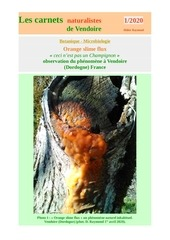 orange slime flux carnets nat vendoire d raymond 2020