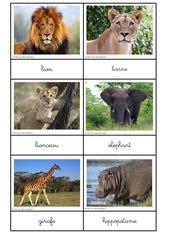 nomenclatures animaux 1