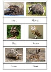 nomenclatures animaux 2