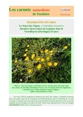 calendula arvensis vigne verteillac carnets d raymond 2020