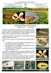 18 20 teigne olivier du 17052020