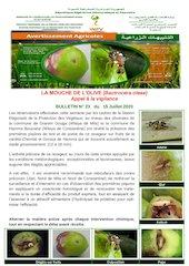 23 20mouche de lolive bactrocera oleae converti