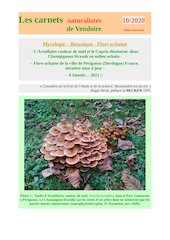 champignons urbains perigueux carnets nat d raymond 2020