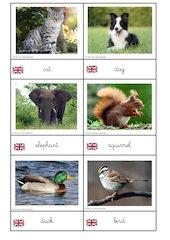 carte animaux anglais cursif 1
