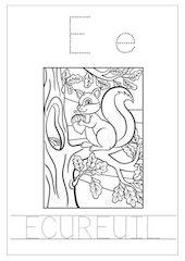 lettre e ecureuil script