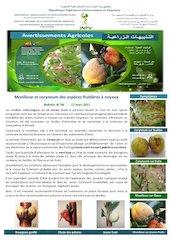 06 21 moniliose et coryneum des espces fruitires  noyaux fin