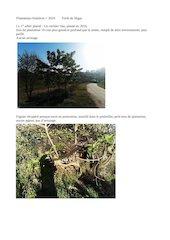 plantations arbres anterieures